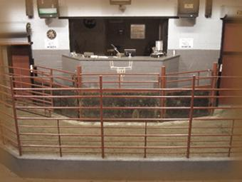 livestock auction cattle